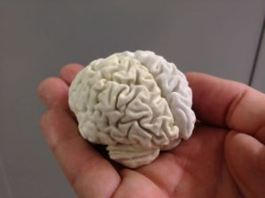 image from: http://www.instructables.com/id/Edible-Chocolate-Brain-from-MRI-Scan/
