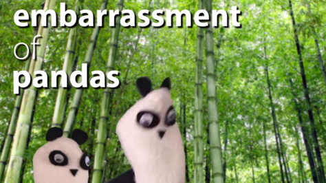 "image from ""Weird Animal Group Names"" sock puppet video"